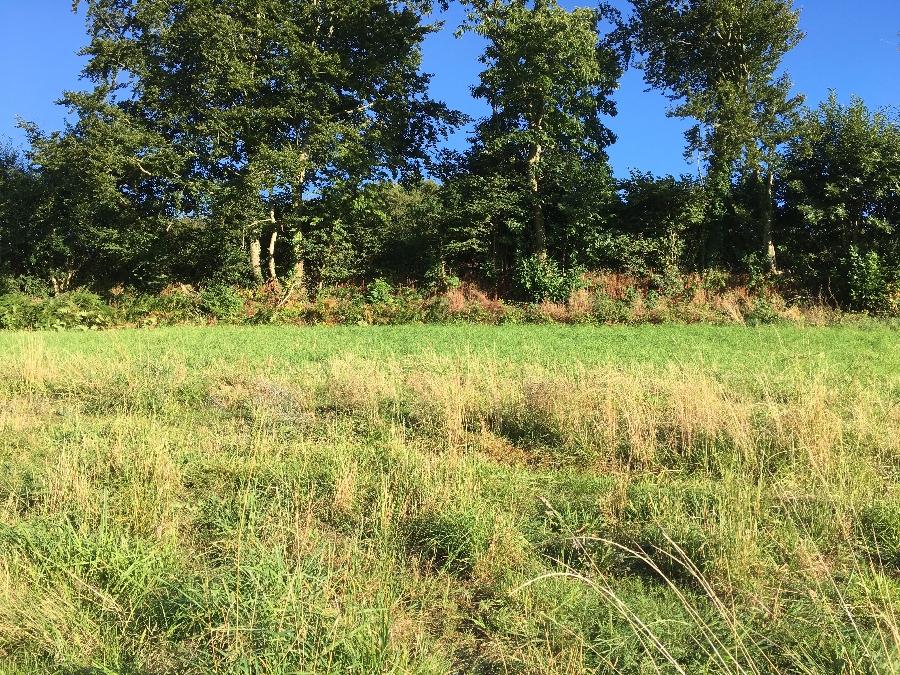 Terrain de 444 ou 600 m² à Landerneau à partir de 59 000 €
